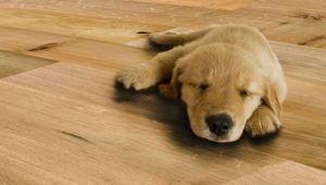 Dvouvrstvé dřevěné podlahy floor forever